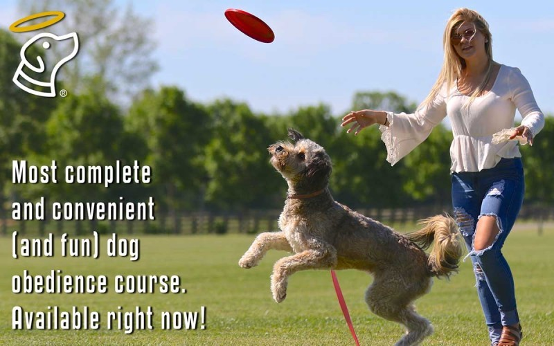 Most complete and convenient (and fun) dog obendience course. Available right now!