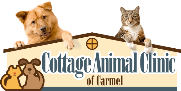 Cottage Animal Clinic of Carmel Home